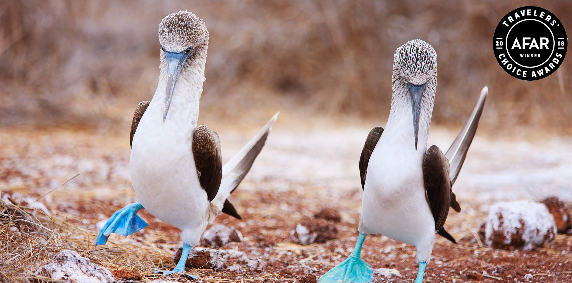South America Ecuador Galapagos Islands beautiful wild life Darwin blue footed boobies -luxury vacation destinations