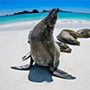 South America Ecuador Galapagos Islands beautiful wild life Darwin sea lion -luxury vacation destinations