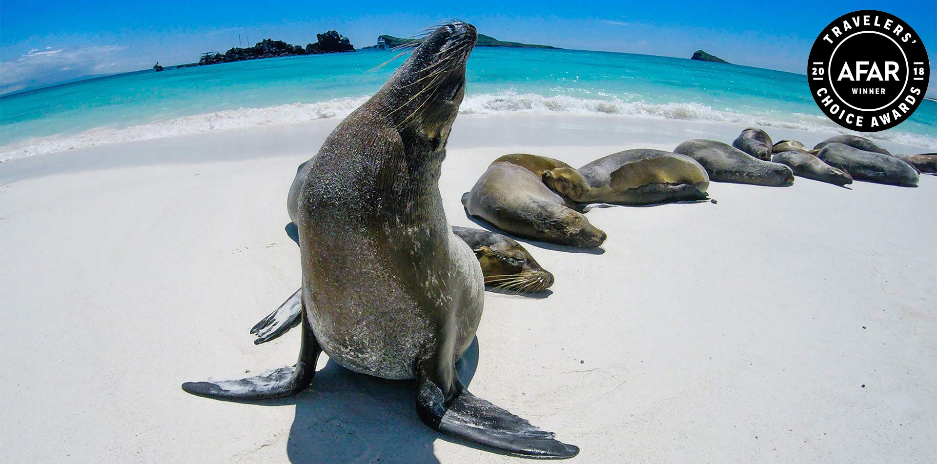 Sealions on a Beach in the Galapagos Islands