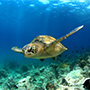 South America Ecuador Galapagos Islands beautiful wild life Darwin sea turtle -luxury vacation destinations
