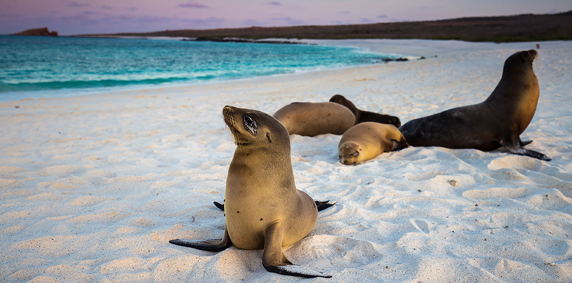 Sea Lions on a Beach, Galapagos Islands