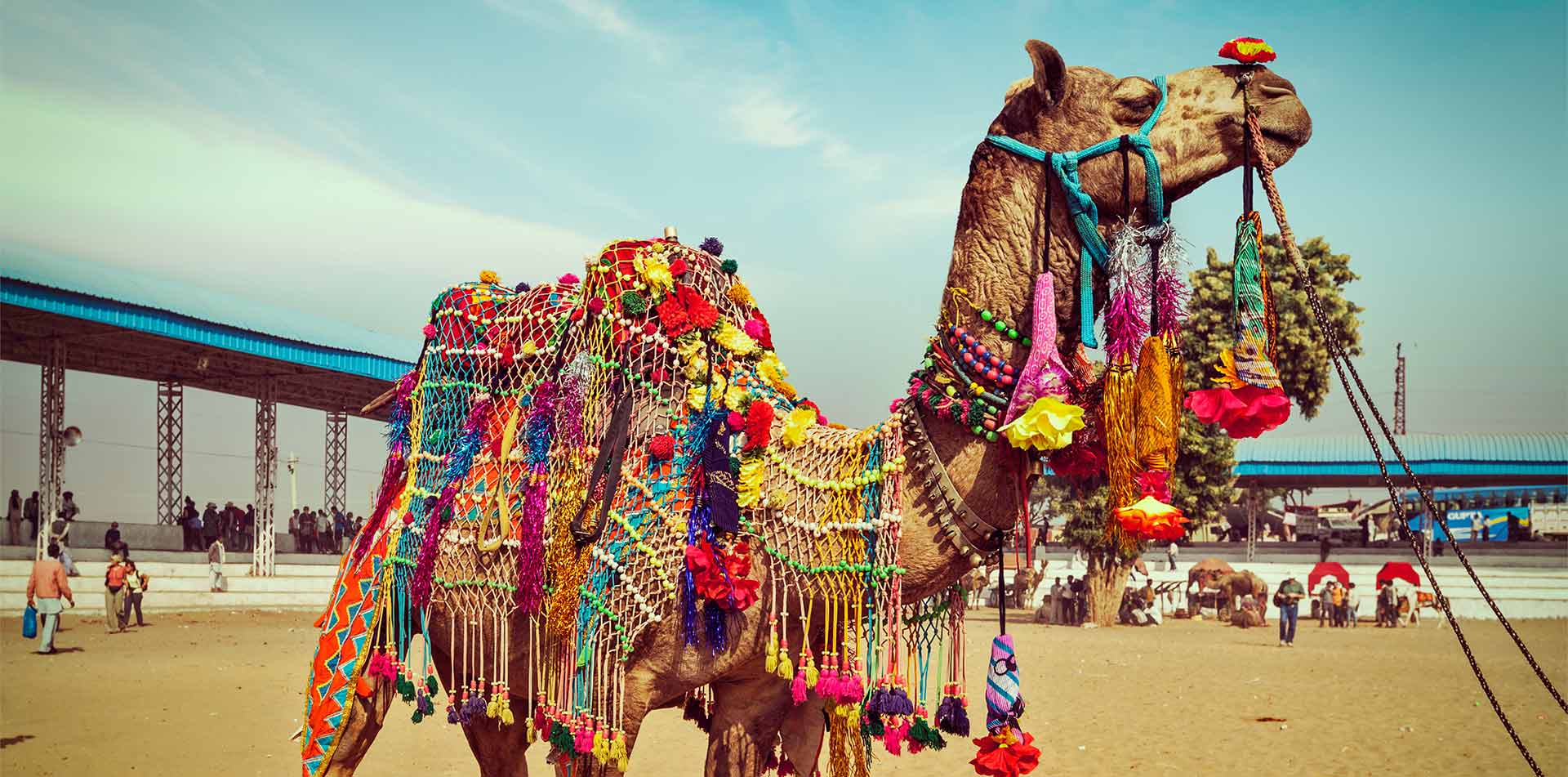 Asia India Rajasthan camel decorated for the Pushkar Camel Fair - luxury vacation destinations