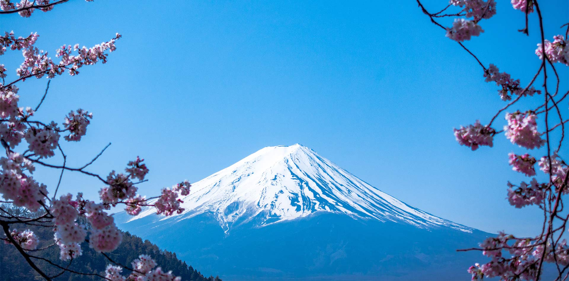 Asia Japan Cherry Blossom flowers and Mount Fuji with snow - luxury vacation destinations
