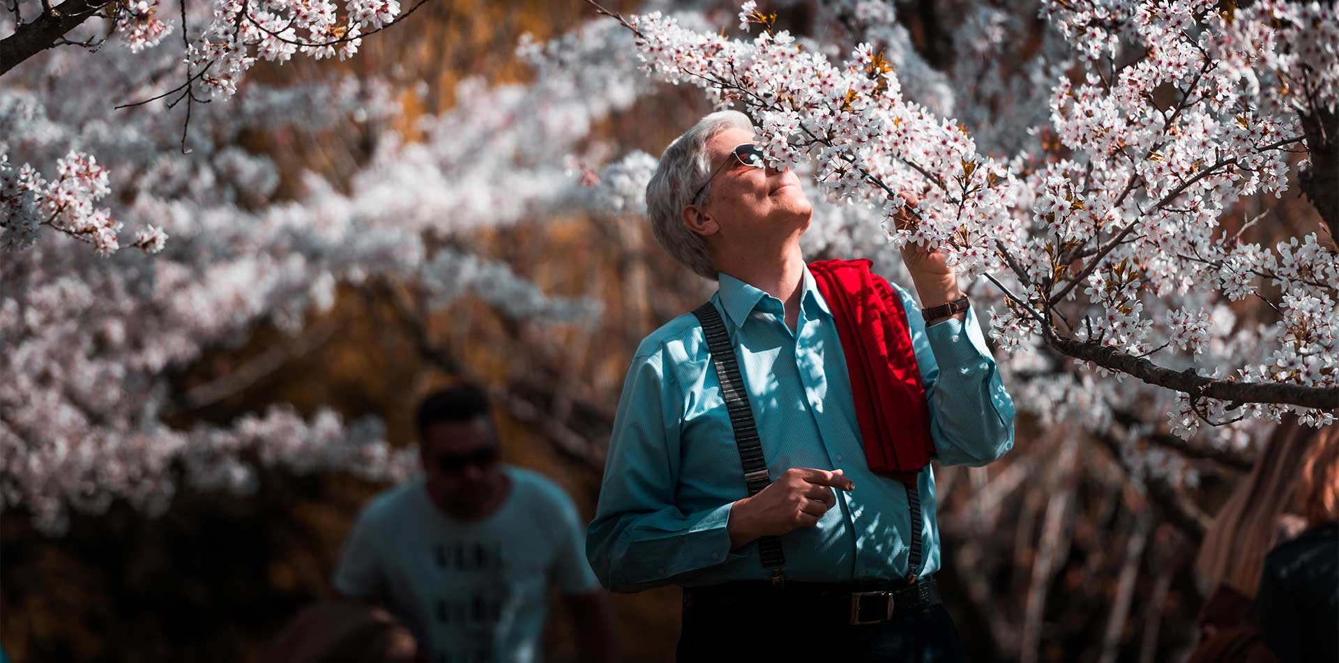 Asia Japan Tokyo traveler enjoying flowers on a tree during Sakura Cherry Blossom festival - luxury vacation destinations