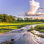 Asia Nepal beautiful remote Chitwan National Park exotic lush riverside jungle - luxury vacation destinations