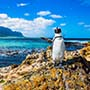 South Africa black white penguin