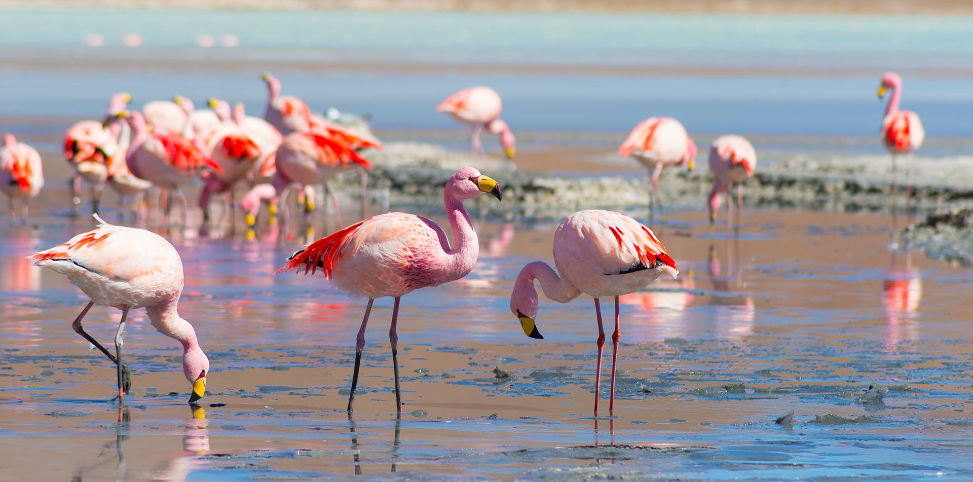 South America Chile Wildlife Flamingos Nature Natural Habitat - luxury vacation destinations