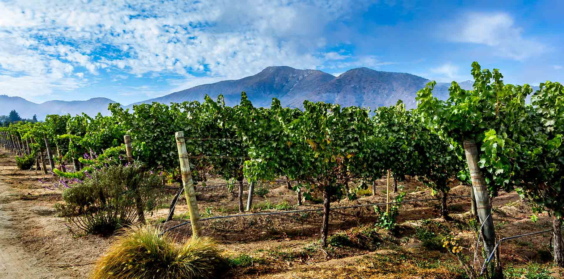 South America Chile Vineyard Landscape Casablanca Valley - luxury vacation destinations