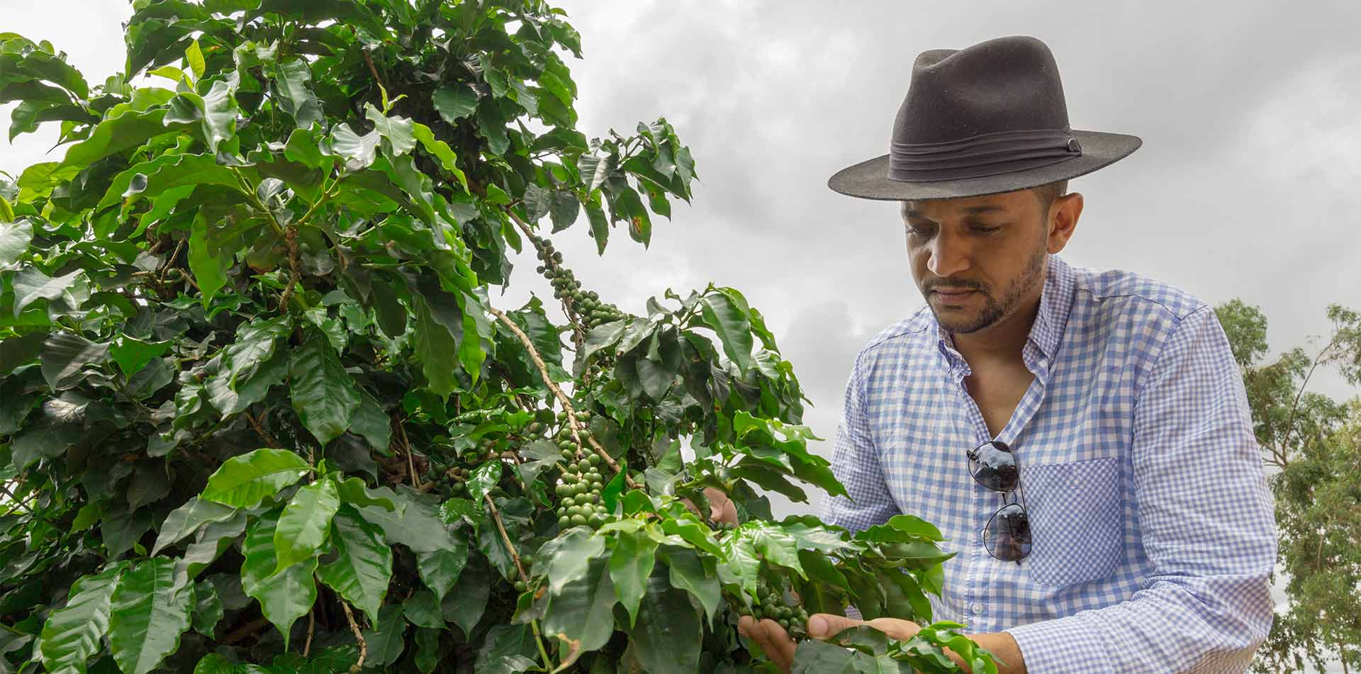 South America Colombia local man examining coffee beans on plantation - luxury vacation destinations