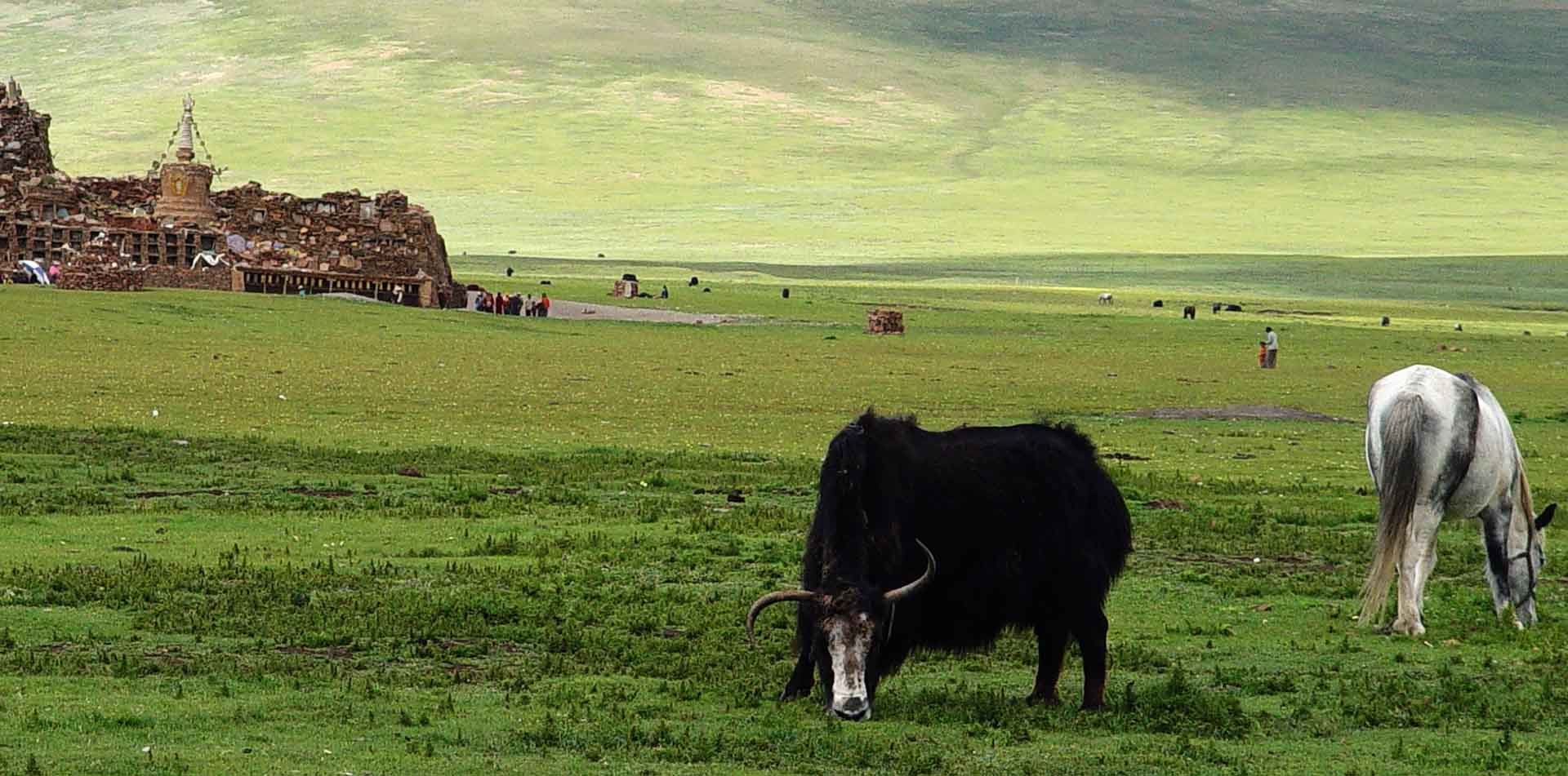 Asia China Shangri-La yak and horse grazing in a valley with ruins in background - luxury vacation destinations