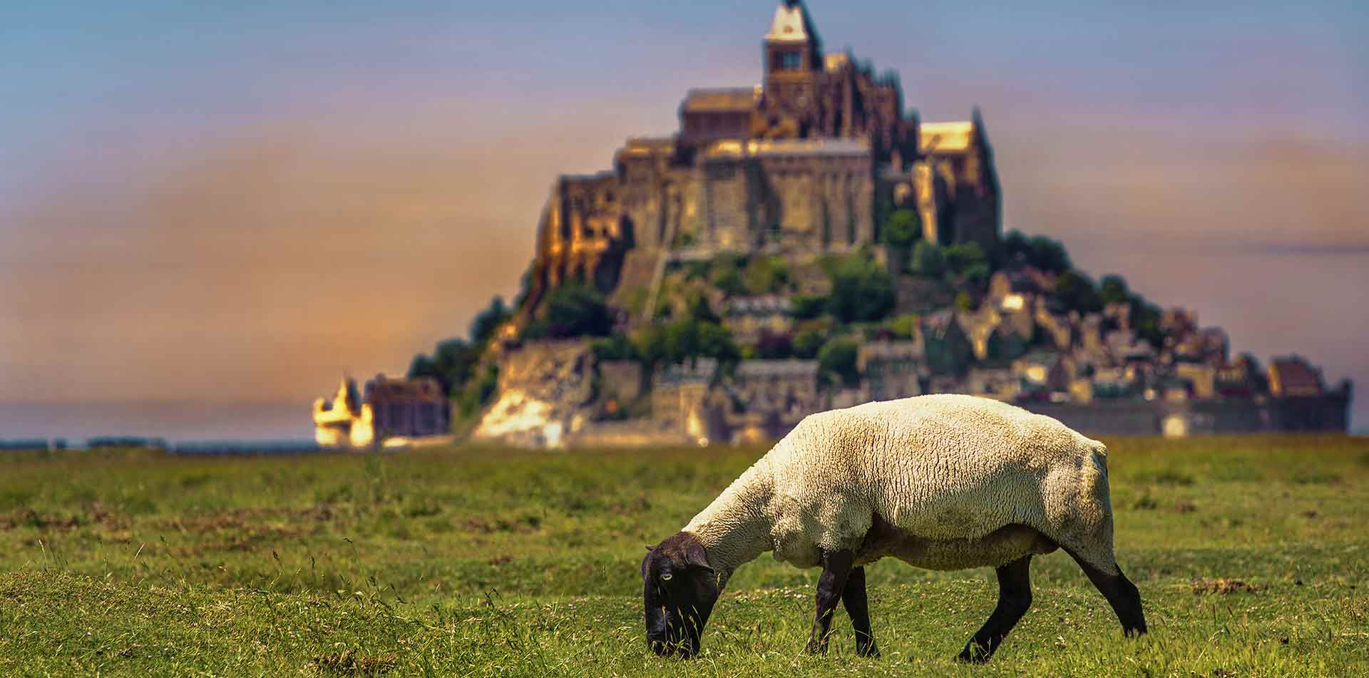 Europe France Normandy historic Mont-Saint-Michel colorful sunset sheep grazing on green grass - luxury vacation destinations