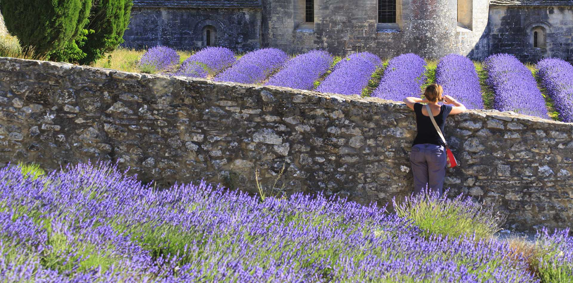 Europe France Provence woman in lavender fields in Luberon Regional Nature Park - luxury vacation destinations