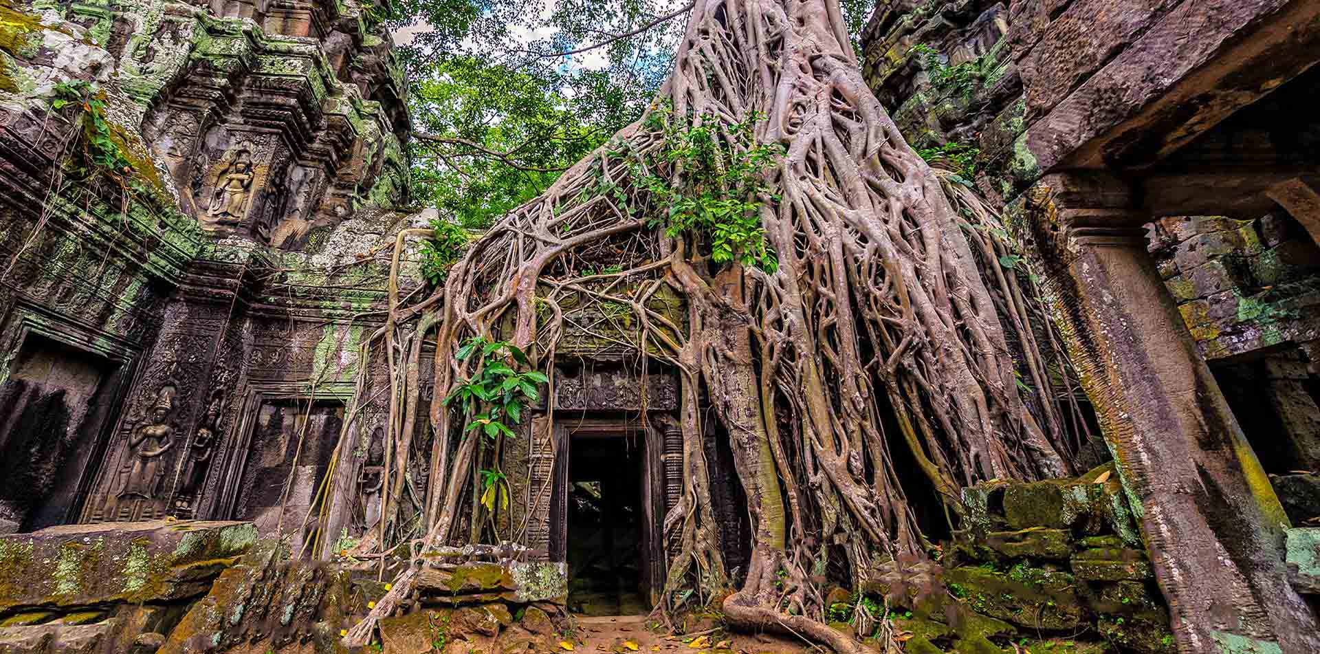 Asia Cambodia Siem Reap Angkor Wat Ta Prohm temple overgrown with banyan tree - luxury vacation destinations