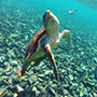 Belize North America Turtle Sea View Underwater Island Explore Tour Travel - luxury vacation destinations