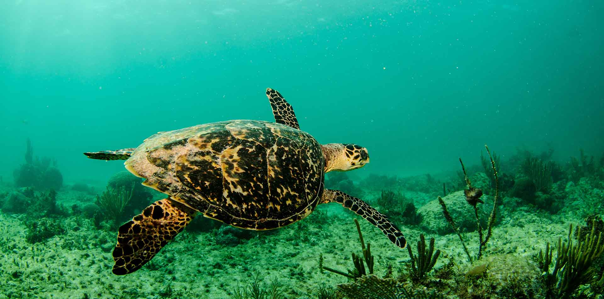 Belize North America Sea Turtle Island Explore Tour Travel Destination - luxury vacation destinations