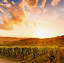 Vineyard at Sunset in Napa & Sonoma