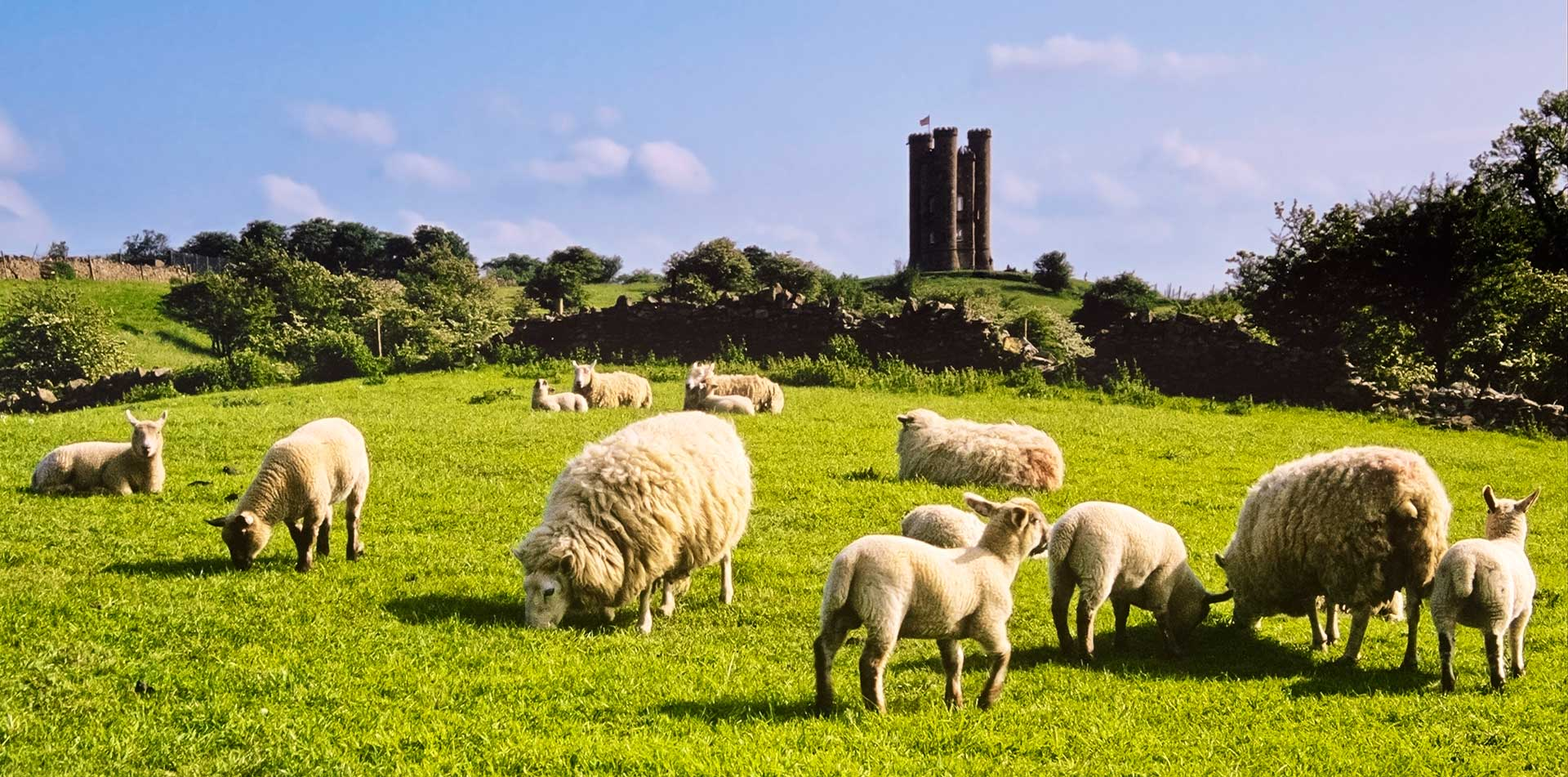 Europe United Kingdom England Cotswolds green meadows castle sheep rolling hills - luxury vacation destinations