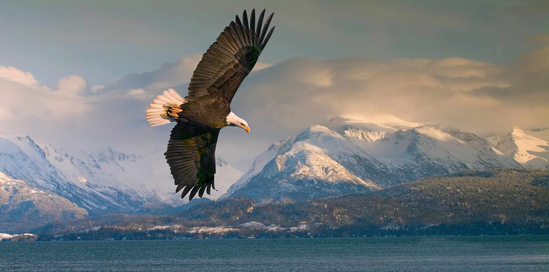 North America United States Alaska Kenai Denali mountain lake wildlife bald eagle fly - luxury vacation destinations