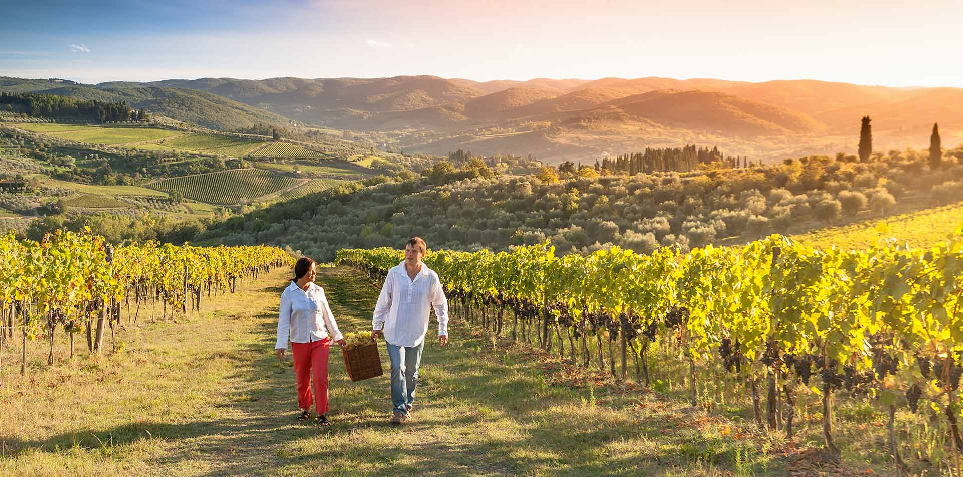 North America United States California Napa Sonoma couple vineyard walk harvest grapes wine - luxury vacation destinations