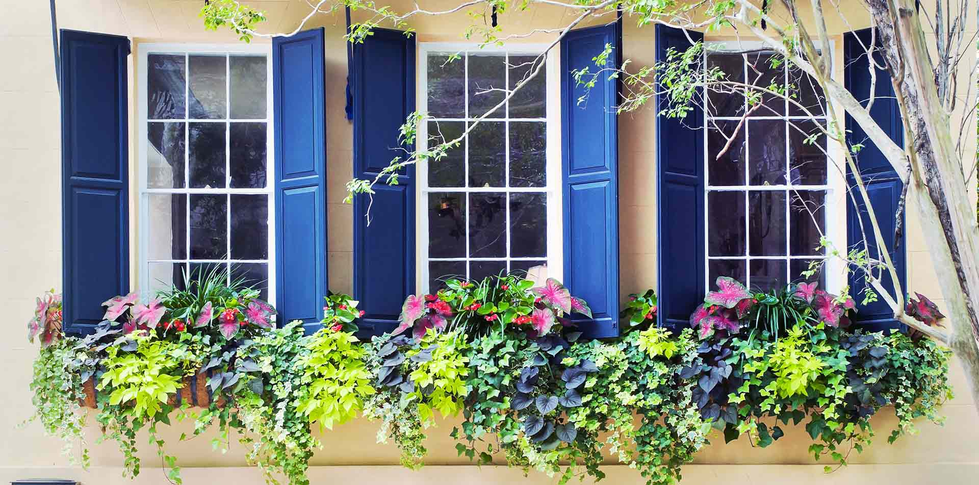 North America United States South Carolina Charleston colorful shutters window boxes flowers - luxury vacation destinations