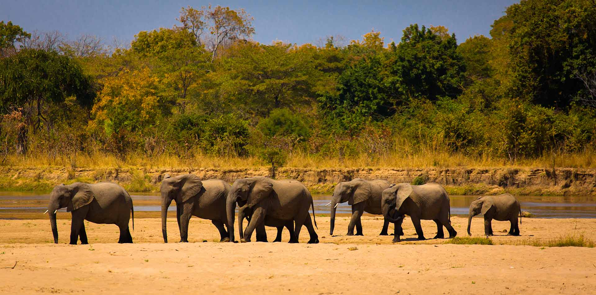 Africa Zambia Luangwa National Park safari wild elephant herd remote dry landscape - luxury vacation destinations