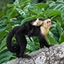 Costa Rica Monkey Wildlife Waterfall Adventure Explore Tour Travel Jungle - luxury vacation destinations