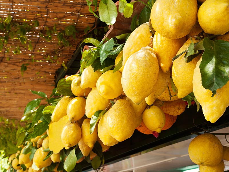Europe Italy Amalfi Coast Naples Capri hanging lemons limoncello food wine tour - luxury vacation destinations