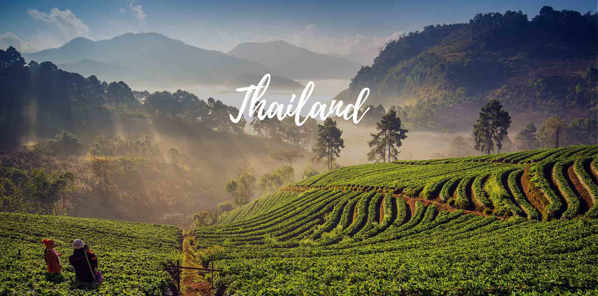 Asia Thailand rolling hills of a green tea leaf plantation - luxury vacation destinations