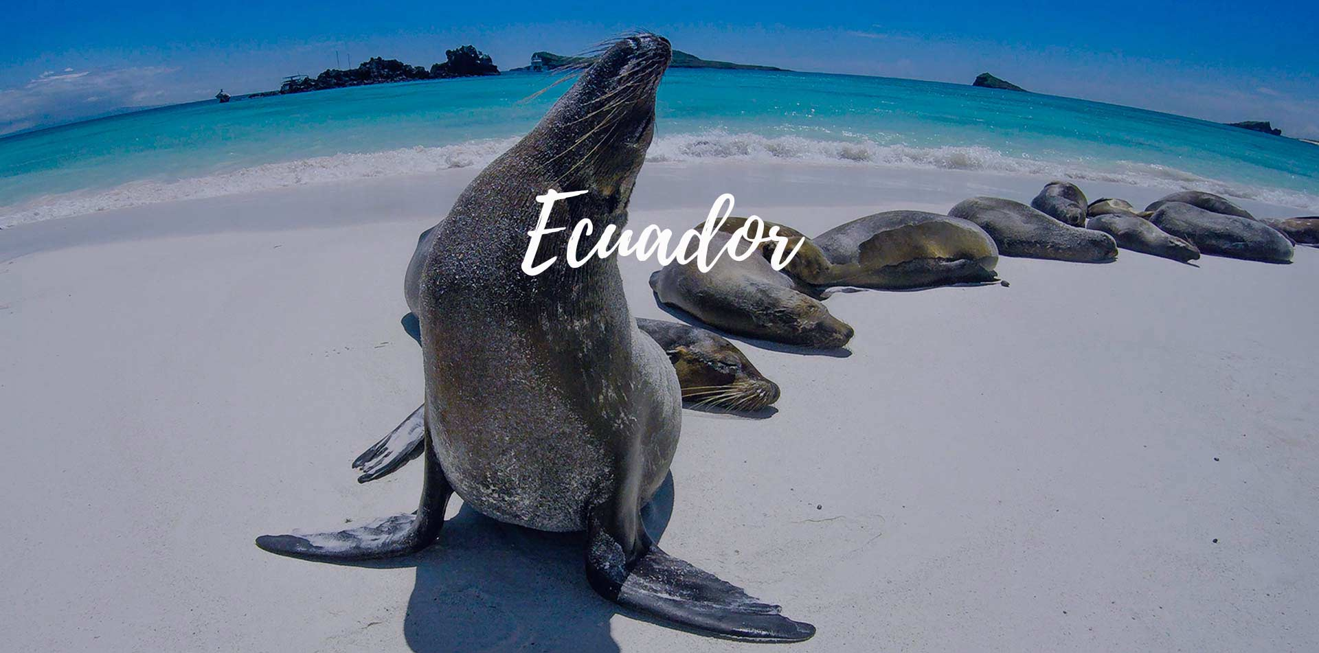 South America Ecuador Galapagos Islands sea lions sunbathing on scenic white sand beach - luxury vacation destinations
