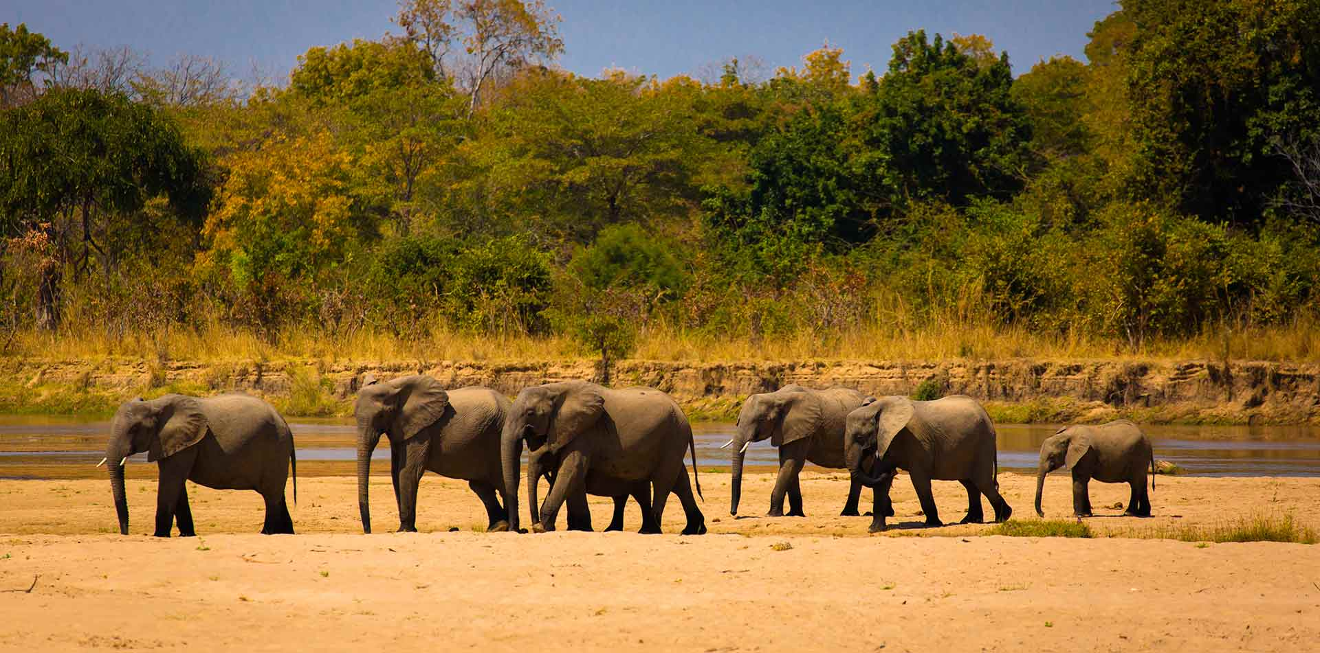 Herd of elephants in South Luangwa Park, Zambia
