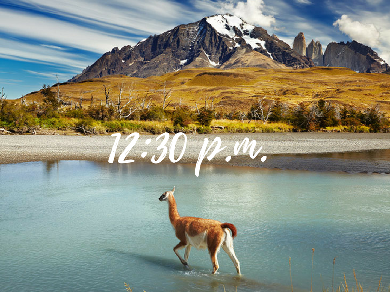 South America Chile guanaco walking through water in Patagonia - luxury vacation destinations