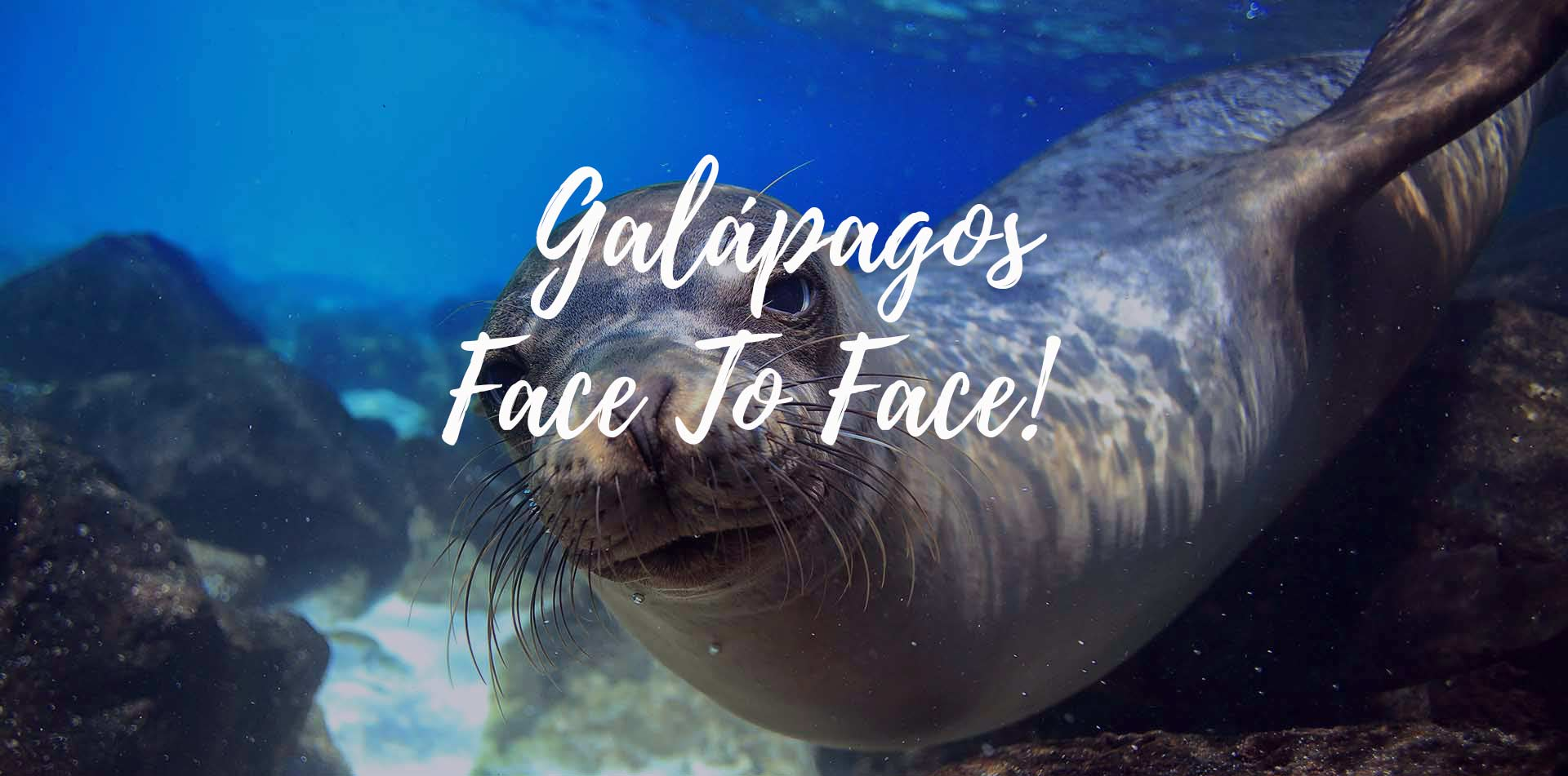 South America Ecuador Galapagos Islands sea lion underwater close up Galapagos Face to Face - luxury vacation destinations