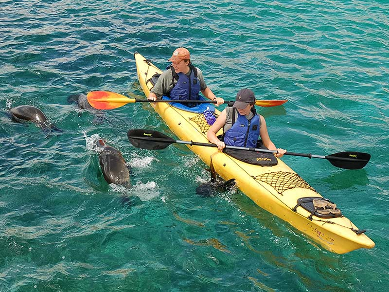 Kayakers and Sea Lions in the Galapagos Islands