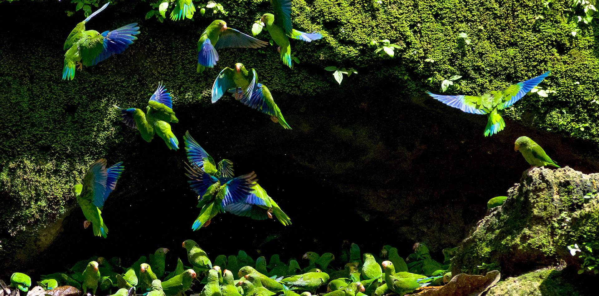 Ecuador South America Amazon river Yasuni National Park beautiful birds - luxury vacation destinations