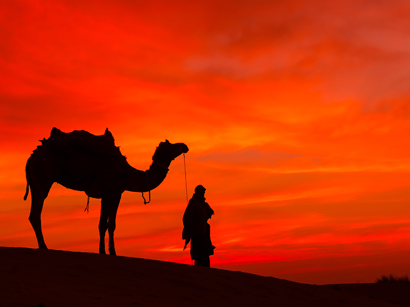 Camel at Sunset, Morocco